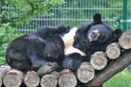 Toruń Atrakcja Zoo Toruński Ogród Zoobotaniczny